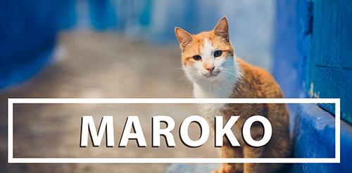 fotograf slubny maroko